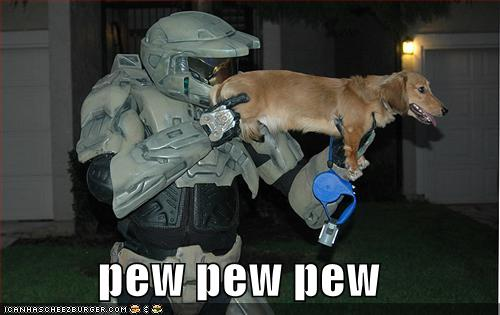 funny pictures Funny-pictures-halo-dog-pew